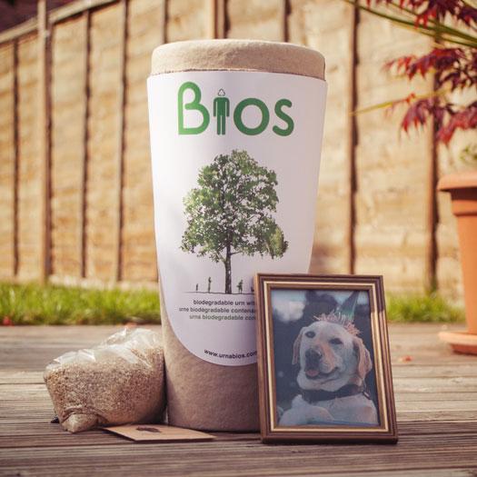Urna biodegradabile cremazione animali, L'Avvenire Onoranze Funebri Prato